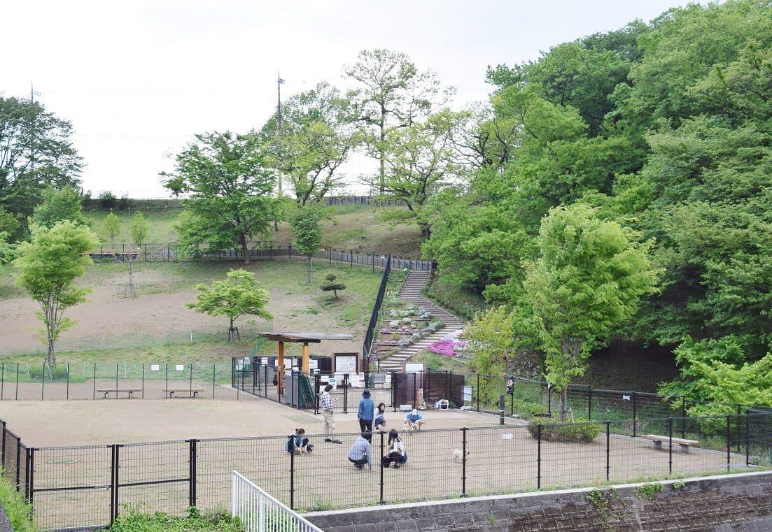桜ヶ丘公園ドッグラン-1